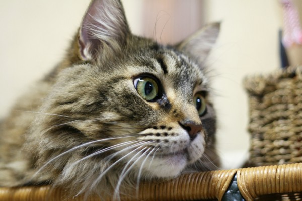140126cat ashinari 600x400 - 無料で商用利用可能な、猫写真素材提供サイトまとめ