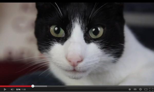 140128loudestcat 600x358 - 白と黒のハチワレ猫、世界最大のゴロゴロ音を出す(動画)