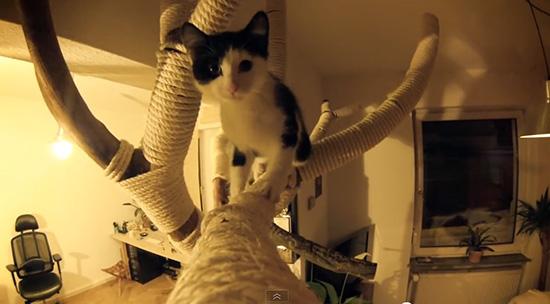 140203DIYCatTree01 - ハイレベルなDIYキャットツリー、制作中から猫まっしぐら