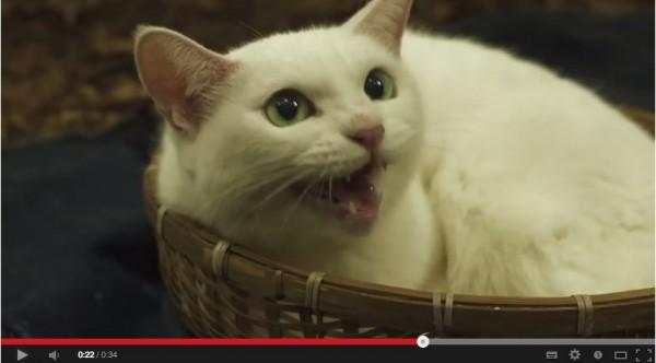 140203nekozamuraimovie01 600x332 - 白猫の玉之丞さまが主演する、劇場版「猫侍」の予告編がYouTubeで公開