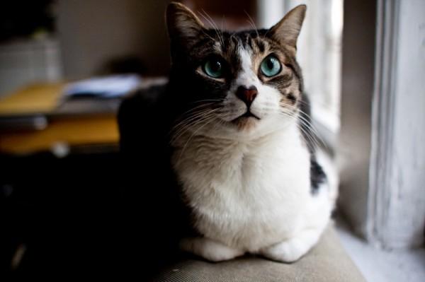 140218Heartnosecat 600x399 - 愛を運んでくれそうな、ハート柄の鼻を持つ猫