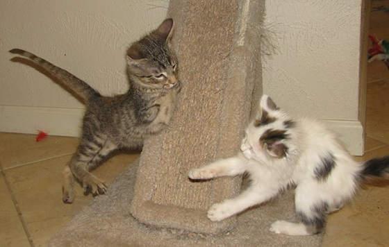 140226cat Mercury03 - 前脚を失った子猫、二足歩行で元気一杯に生きる