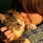 迷子の猫と再会をサポートするサイト「ネコサーチ」