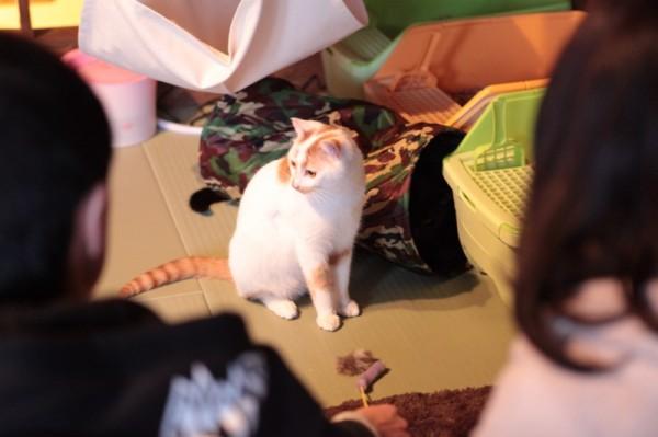 140301necoRepublicIMG 1329 600x399 - 岐阜の猫カフェで始まる、ビジネスと猫保護活動の素敵な関係