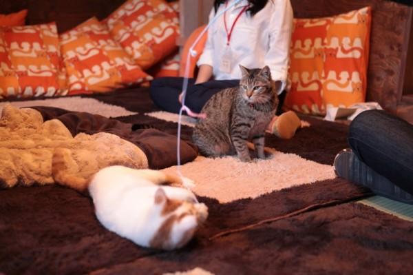 140301necoRepublicIMG 1341 600x399 - 岐阜の猫カフェで始まる、ビジネスと猫保護活動の素敵な関係