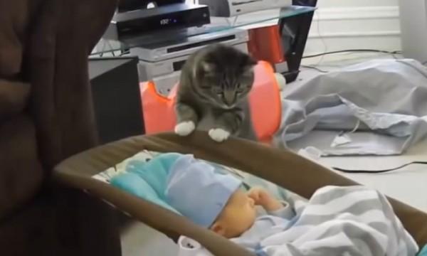 140312catmeetsbaby 600x360 - 赤ん坊と初対面する猫、おっかなびっくり覗き込む