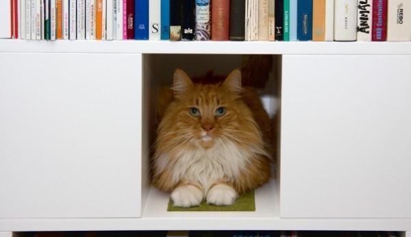 140326catbookshelf03 600x347 - キャットタワー機能付き本棚、本を取る手が猫に伸びそう