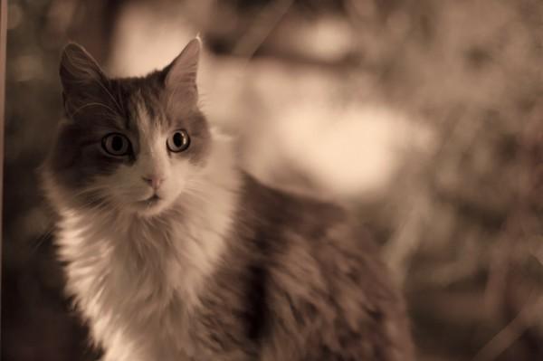 140402cat 600x399 - 本日の美人猫vol.71