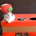 無邪気な子猫のモグラ叩き、ハンマーを下ろす手は自然とゆっくりに