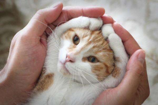 140419catPose 600x399 - 猫の魅力を、無限大にアップさせるポーズが発見される