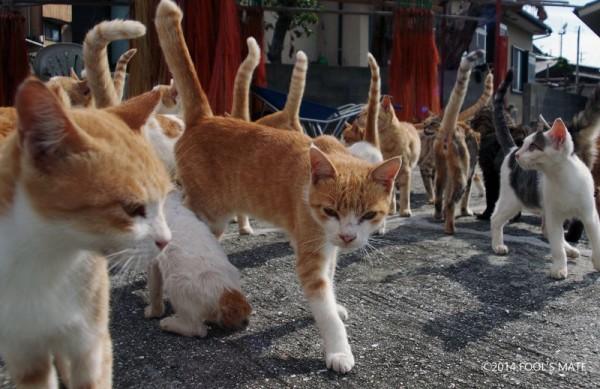 140424nekoshima03 600x389 - 愛媛の猫島「青島」写真集、収益の一部は猫島の環境整備に