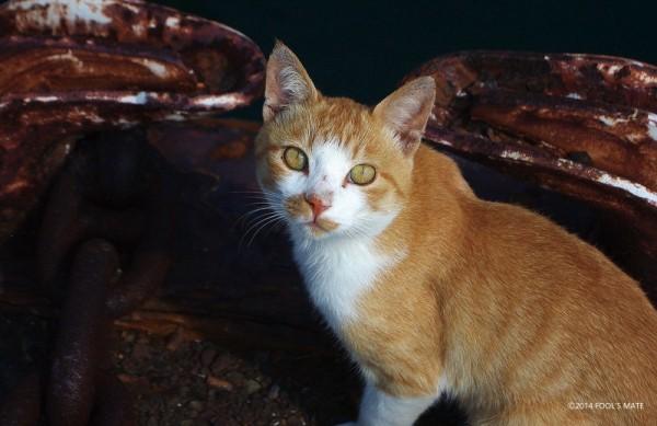 140424nekoshima05 600x389 - 愛媛の猫島「青島」写真集、収益の一部は猫島の環境整備に