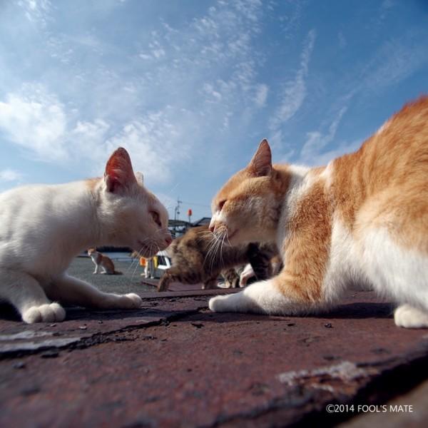 140424nekoshima16 600x600 - 愛媛の猫島「青島」写真集、収益の一部は猫島の環境整備に