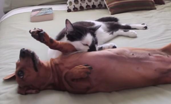 140427catanddog 600x366 - 猫の癒しフォースは、ワンコにも効く