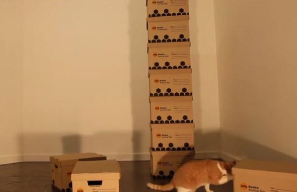 140427catbox03 600x389 - 段ボール猫タワーのメイキング、猫の満足度が伝わる動画に