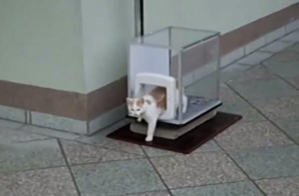 140516catelevator 600x395 - 慎重派の茶白猫、2階のベランダから専用エレベーターで地上へ