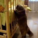 新生児に対面する猫、緊張しすぎてシッポがまっすぐに