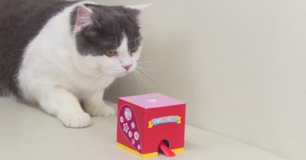140523kotoripet 600x314 - 挙動不審な猫、歌を奏でる小鳥ロボのティーザー動画に登場