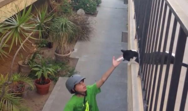 140602cathightouch 600x354 - 通路に寝そべる猫、少年のハイタッチに見事応える