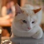 本日の美人猫vol.83
