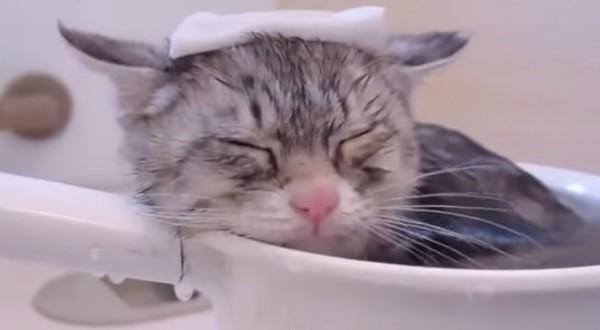 140610bathcat 600x330 - 生まれて初めてお風呂に入る子猫、気持ちよさに目を細める
