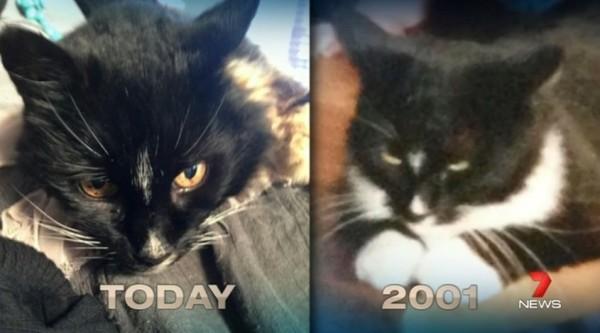 140616catreturn 600x333 - 行方不明だった黒猫、13年ぶりに奇跡的な帰宅を果たす