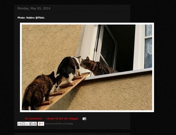 140618catladders 600x458 - 淡々と猫用階段だけを紹介し続けるブログ