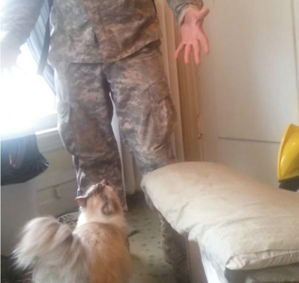140629catjump 600x568 - 兵役帰りの飼い主の帰宅を待つ猫、渾身のジャンプで出迎える