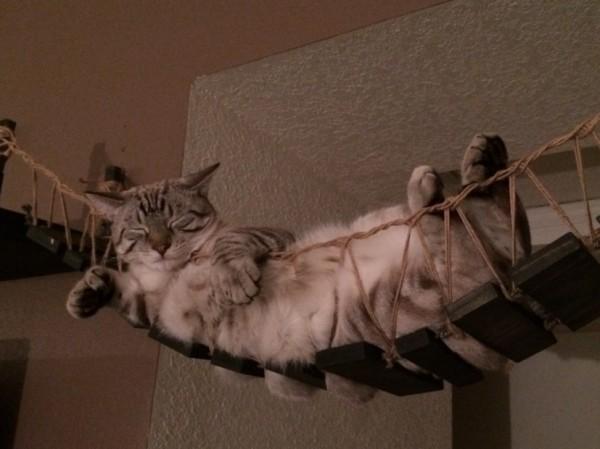 140630catmock08 600x449 - 猫をダメにする「インディ・ジョーンズの吊り橋」が絶賛販売中