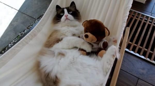 140701cathammock1 600x333 - ハンモックに乗れない猫、4ヵ月後にはその感覚をすっかり忘れる