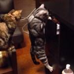 おやつの引き出しを開けた猫、まさかの展開に表情が固まる