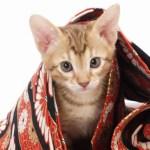 猫の日本史:「猫」の初出史料は何か