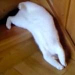 猫は流体であると、力強く納得できる動画が見つかる