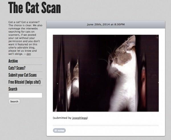 140813thecatscan02 600x490 - ひたすらに猫のスキャン写真をアップするブログ