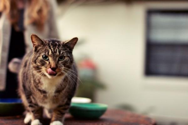 140814cathistory 600x399 - 猫の日本史:日本霊異記の「猫」、正月一日にこっそり現れる