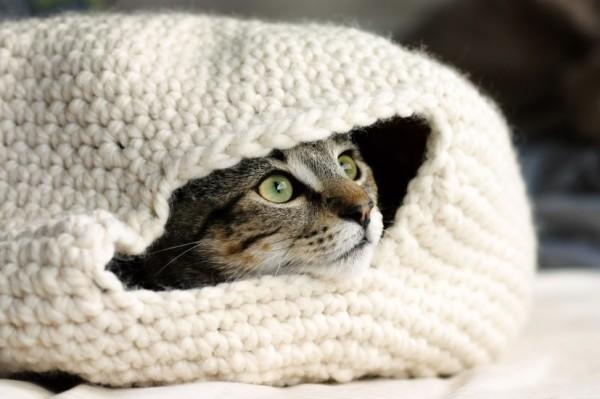 140822catbed01 600x399 - 手編みの猫ベッドに包まれる猫、目を真ん丸にして外を眺める