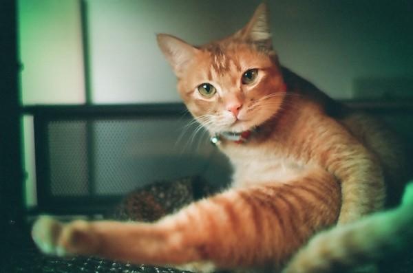 140826cat 600x397 - 本日の美人猫vol.97