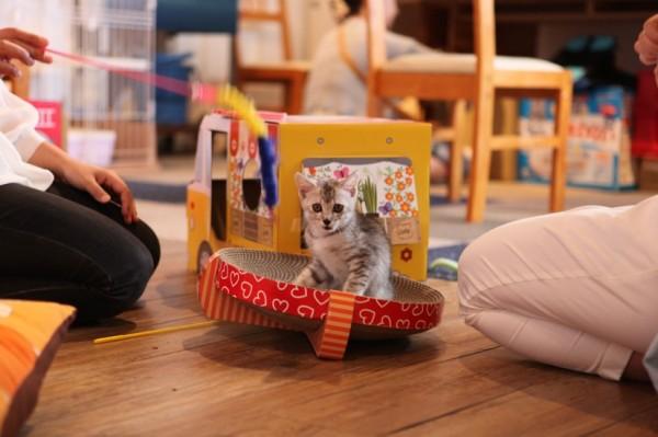 140907nekoichinekoza07 600x399 - 「ネコ市ネコ座」トークショー、杉本彩さんが猫保護活動への理解を呼びかける