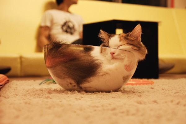 140909catbowl 600x399 - 透明ボウルに眠る猫、猫の流体説を示す強力な事例に