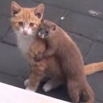 仲良く遊ぶイタチと子猫、抱き合いながらカメラ目線に