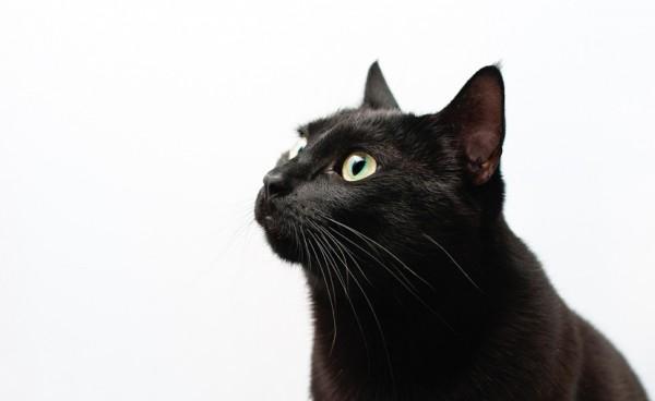 140928dairicat 600x368 - 猫の日本史:日本最古の飼い猫記録、宇多天皇の「うちの御ねこ」