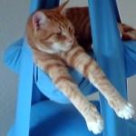 宙ぶらりんの猫ベッドで寛ぐ猫、前脚を伸ばして悠々自適