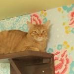 猫カフェと猫保護を両立する「ネコリパブリック」、大阪・心斎橋に2号店が誕生