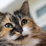 本日の美人猫vol.105