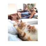 ほんわか猫写真集『きなことじいじ』、出版に向けKickstarterで支援募集中