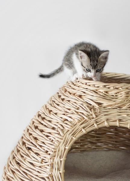 141021niu 431x600 - デザイン籐製猫ベッド、日差しを浴びてのお昼寝に最適