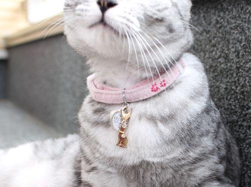141022pair01 - 猫シルエットのペアペンダント、人と猫とでお揃いに