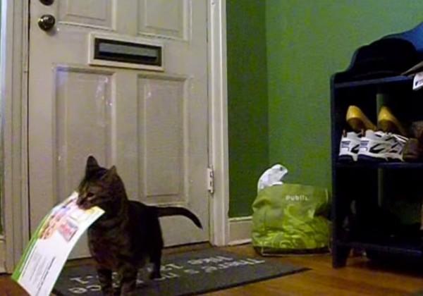 141023baron 600x420 - 郵便局員を待ち伏せる猫、誰よりも早く手紙を受け取りドヤ顔をキメる
