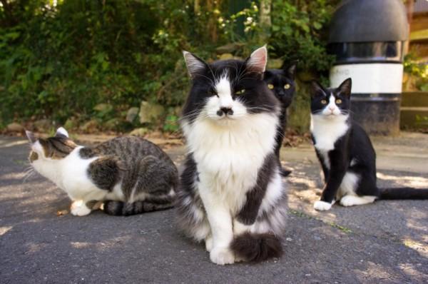 141101tashirocat 600x398 - 猫島・田代島の猫、ストリートビューでいつでも見られることが判明