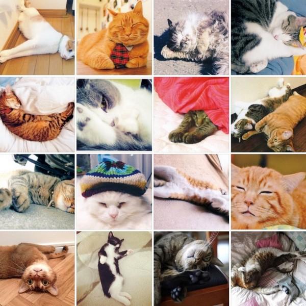 141108UTSTBOKOBAKO 600x600 - 猫の寝姿だけを集めたFacebookページ、11/8〜11/9まで写真展も開催